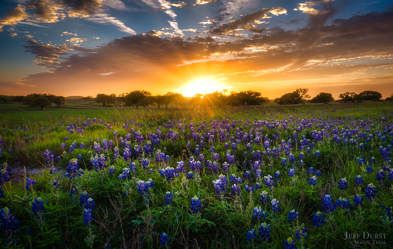 Traditional Bluebonnet Sunset 2018-BETTER