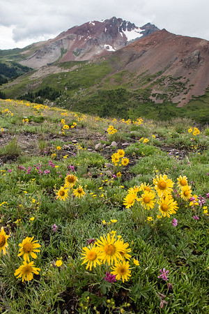 Summer's Bounty, Lizard Head Wilderness, CO
