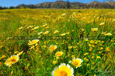 santa margarita wildflowers-ccp-3343