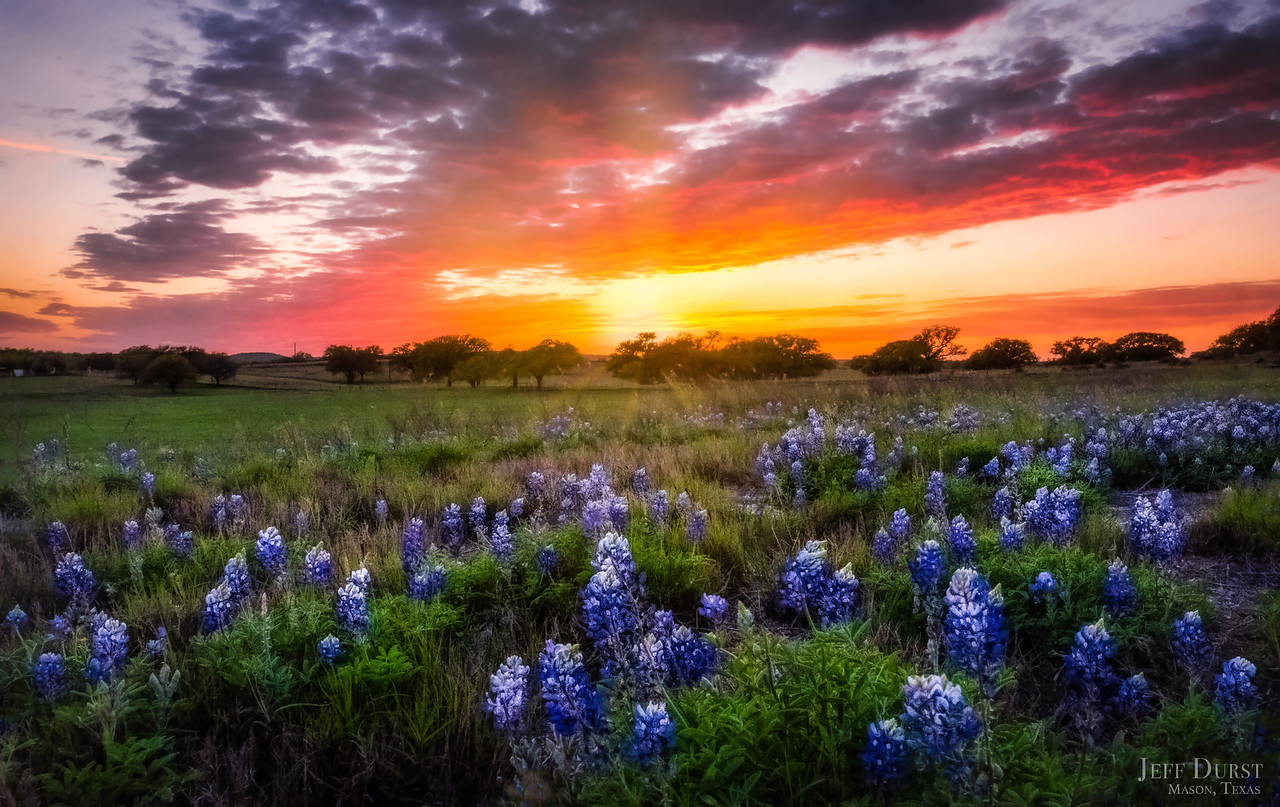 Bluebonnet Orange Purple Sunset 2018-DENOISE