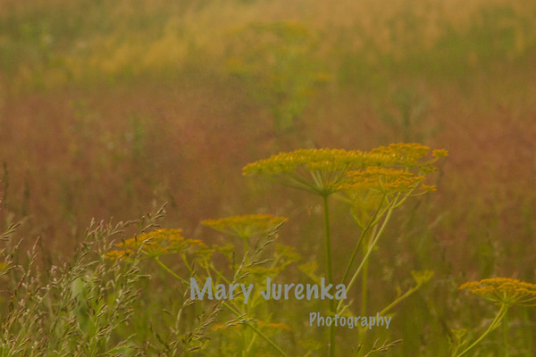 This was taken around sunset in June at Hickory Grove park.