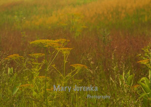 Hickory Grove Prairie in Story county Iowa