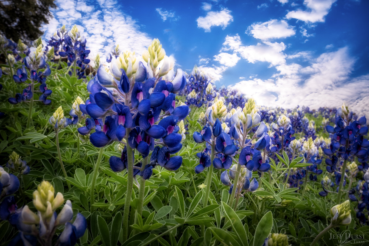 Bluebonnets 2018 Mar Clinic