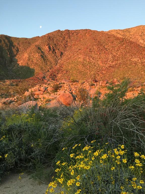 . Sunrise near the trail head at Borrego Palm Canyon, Anza-Borrego Desert Start Park, with moon still visible