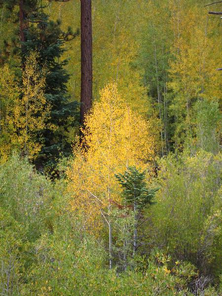 Aspen Grove - San Bernardino National Forest 10.02.11
