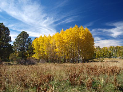 Fall Colors -Road 151 and Bismark Lake Trail - Coconina National Forest, AZ  10.14.11