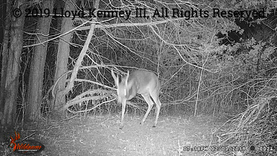 Whitetail Deer captured on a Wildgame Innovations Terra 10 Lightsout Extreme as Cajun's Live Deer Cam streamed the action Live Feb 2019