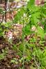 Plant needing identification