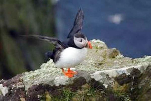 Celeimages Scottish Wildlife_-14