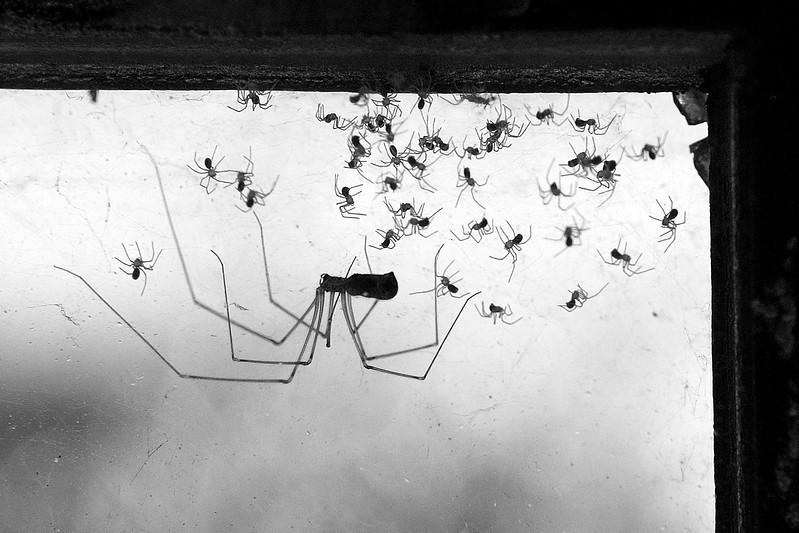 Mommy Spider #1