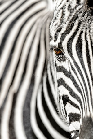 Close up abstract of zebra.