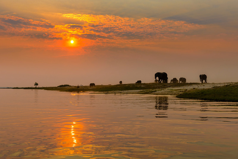Elephants on the banks of the Chobe River, bordering Namibia and Botswana, Africa