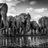 Elephants at water hole, Mashatu, Botswana.