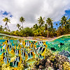 The underwater life in French Polynesia.  Le Taha'a Island. Tahiti