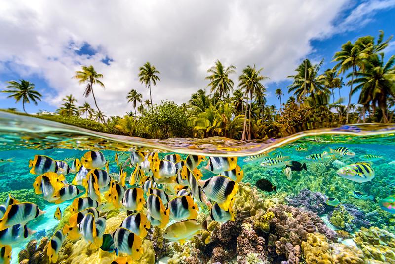 The underwater life in French Polynesia.  Le Taha'a Island. Tahiti