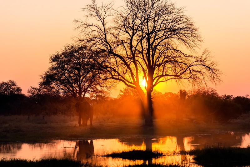 Elephant at sunset, Khwai, Botswana