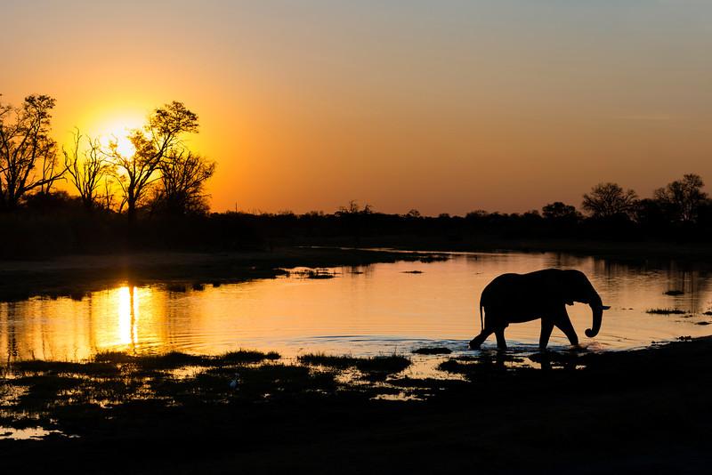 Elephants at sunset, Khwai, Botswana, Africa