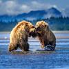 Dominance, Alaska