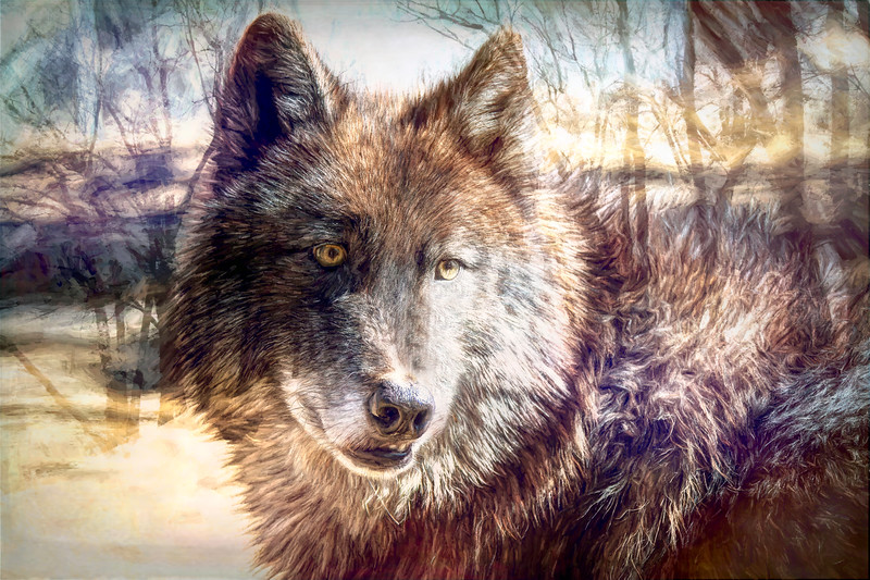 Cool Wolf Picture!