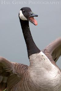 Back Off! Lakeshore Park, Newark, California 1106N-CG1