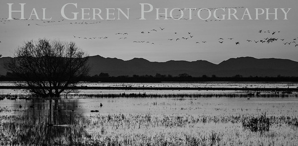Merced National Wildlife Refuge, California 1612M-S2BW1A