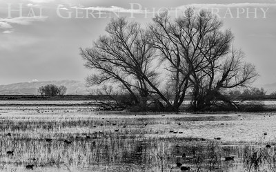 Merced National Wildlife Refuge Merced, California 1503M-M3BW1