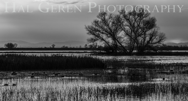 Merced National Wildlife Refuge Merced, California 1503M-M1BW1