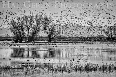 Merced National Wildlife Refuge Merced, California 1402M-B12BW2
