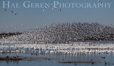 Merced National Wildlife Refuge Merced, California 1402M-B3