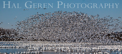 Merced National Wildlife Refuge Merced, California 1402M-B4