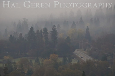 Fog in the Trees Lake Wildwood, California. 0811L-FT4