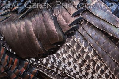 Wild Turkey Lake Wildwood, California 1309W-TP9