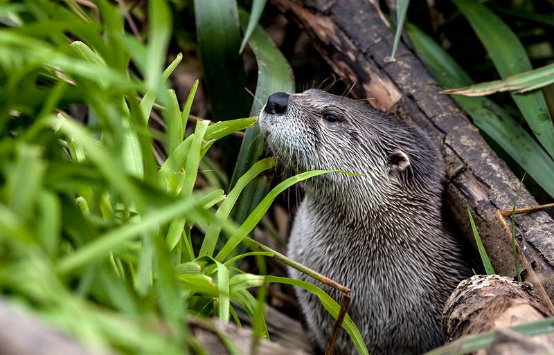 Otter  -9