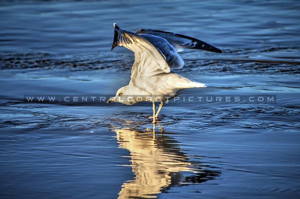 bird_9711