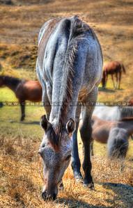 horse_0773