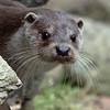 Otter  -7