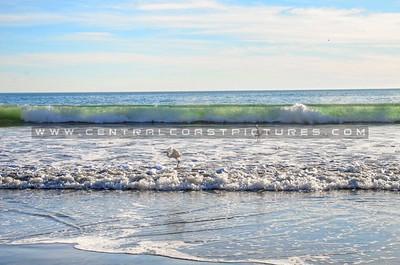 avila-beach-birds_4140