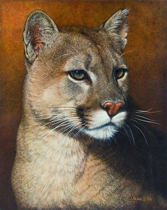 Mountain King -- Cougar