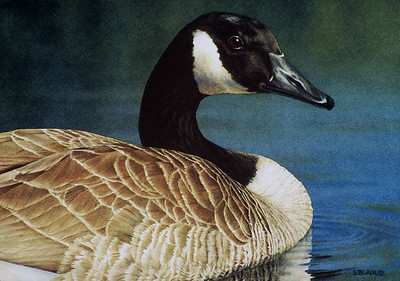 Tranquility -- Canada Goose
