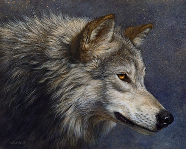 Night Watch -- Gray Wolf