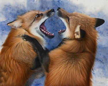 Rivals -- Red Foxes