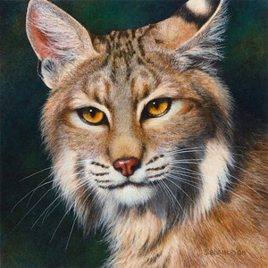 Deadly Serious -- Bobcat