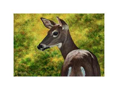Forest Light -- Whitetail Doe