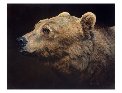 Montana Grizzly -- Grizzly Bear
