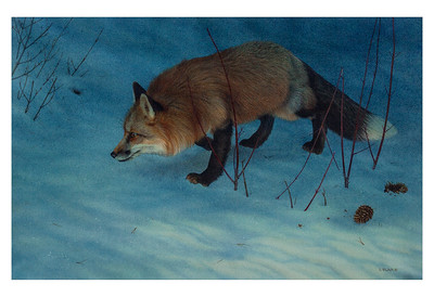 Night Moves -- Red Fox