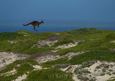 KI Kangaroo hops 2