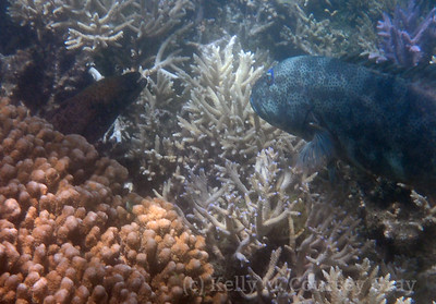 starry grouper and eel 5