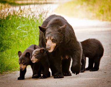 Wildlife Babies