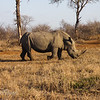 Rhino on the Move