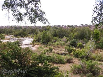 Elephants emerging in the bush.
